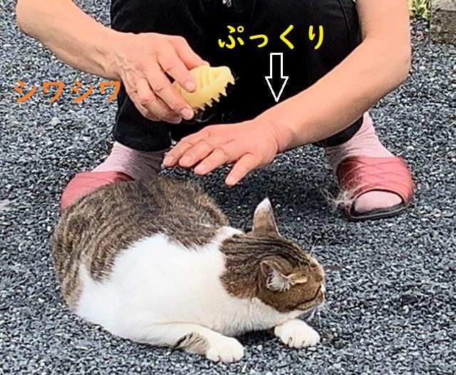 f:id:nekoyanookami:20190826214047j:plain