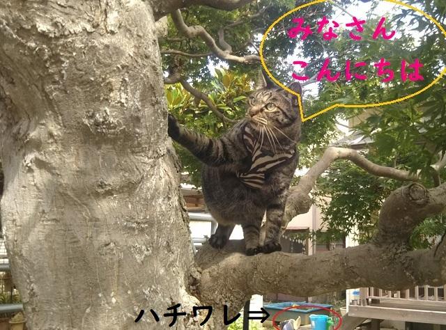 f:id:nekoyanookami:20190828152637j:plain