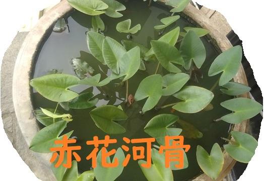f:id:nekoyanookami:20190901171454j:plain