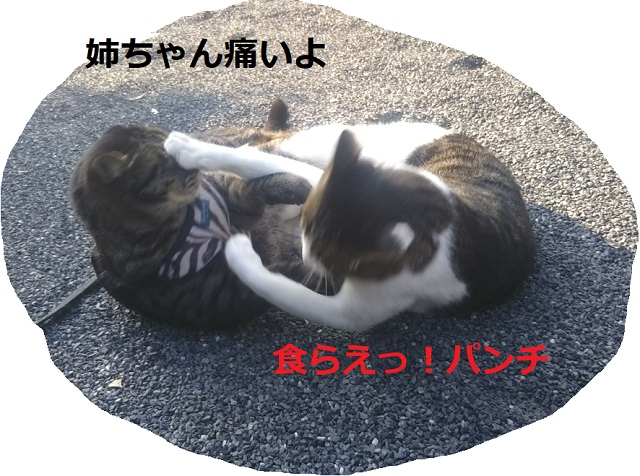 f:id:nekoyanookami:20190910150348j:plain