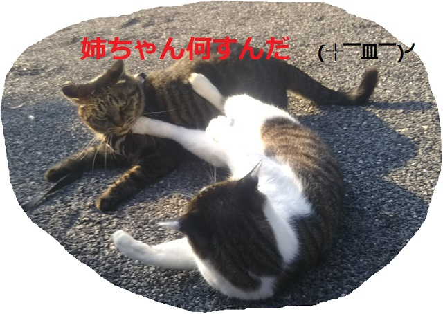 f:id:nekoyanookami:20190910150506j:plain