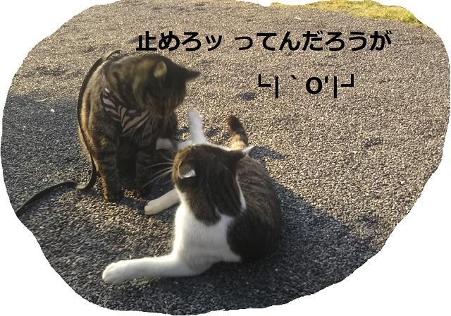 f:id:nekoyanookami:20190910150940j:plain
