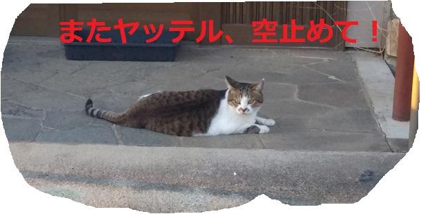 f:id:nekoyanookami:20190910151219j:plain