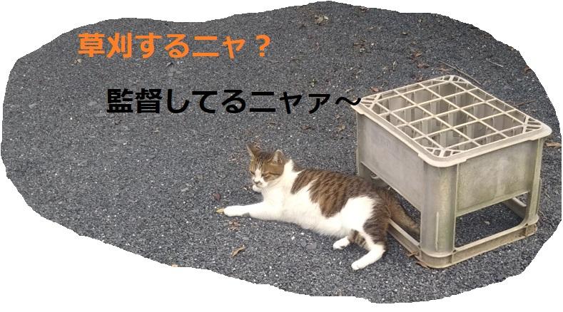 f:id:nekoyanookami:20190913151530j:plain