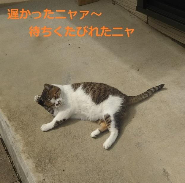 f:id:nekoyanookami:20190913152807j:plain
