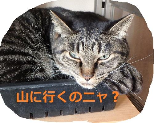 f:id:nekoyanookami:20190915182210j:plain