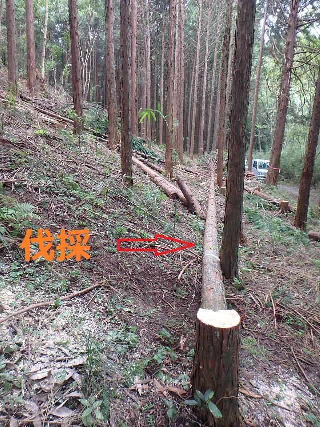 f:id:nekoyanookami:20190915185019j:plain