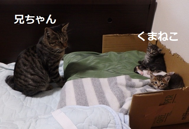 f:id:nekoyanookami:20190917185935j:plain