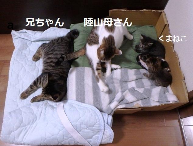 f:id:nekoyanookami:20190917190338j:plain