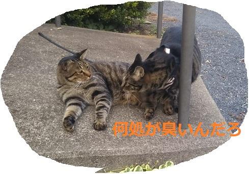 f:id:nekoyanookami:20190917190458j:plain