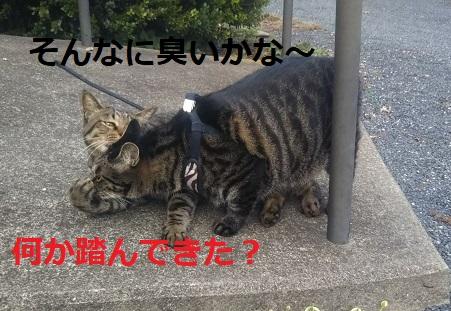 f:id:nekoyanookami:20190917190658j:plain
