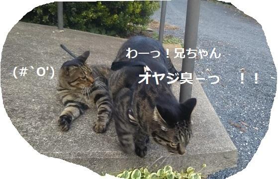 f:id:nekoyanookami:20190917190711j:plain
