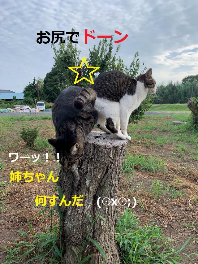 f:id:nekoyanookami:20190917190837j:plain