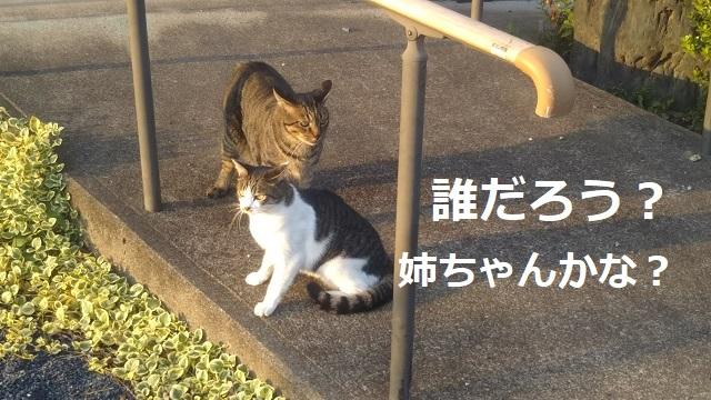 f:id:nekoyanookami:20190920144640j:plain
