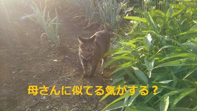f:id:nekoyanookami:20190920144722j:plain