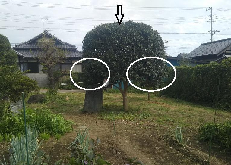 f:id:nekoyanookami:20190924182142j:plain
