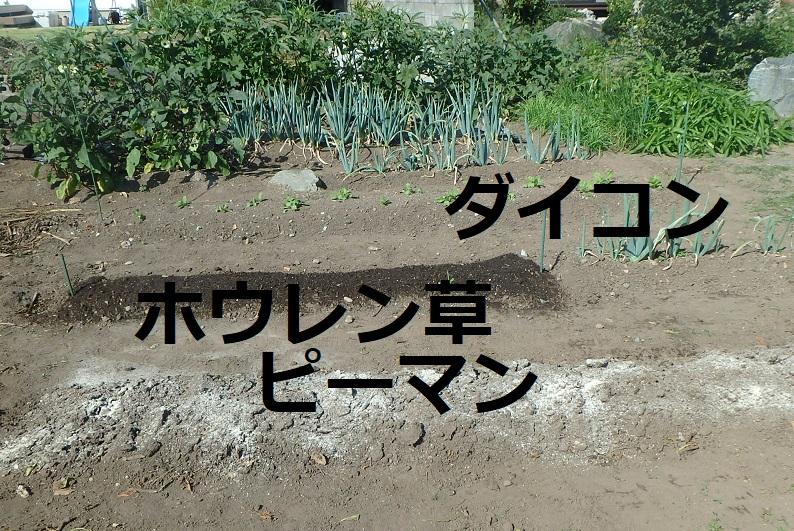 f:id:nekoyanookami:20191001161432j:plain