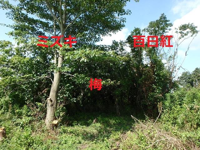 f:id:nekoyanookami:20191015223411j:plain