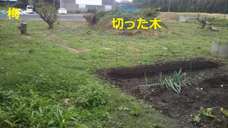 f:id:nekoyanookami:20191015224541j:plain