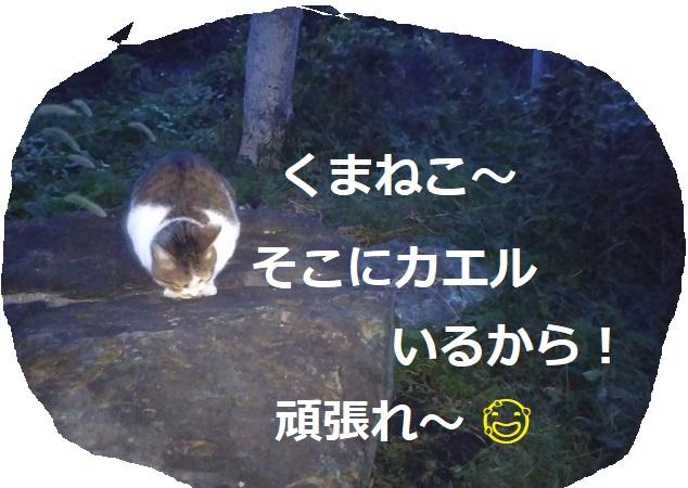 f:id:nekoyanookami:20191019000056j:plain