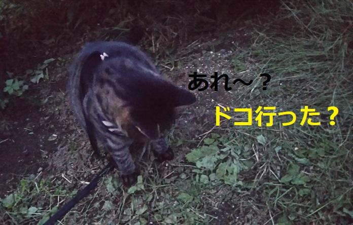 f:id:nekoyanookami:20191019000323j:plain