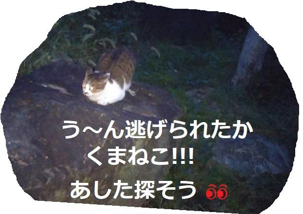 f:id:nekoyanookami:20191019000652j:plain