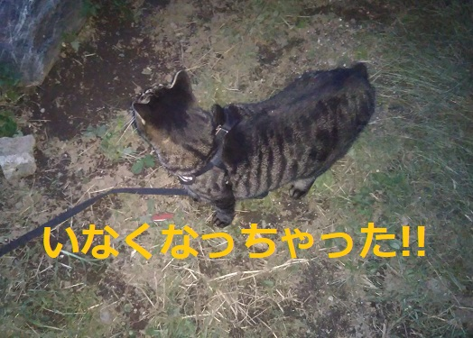 f:id:nekoyanookami:20191019001604j:plain