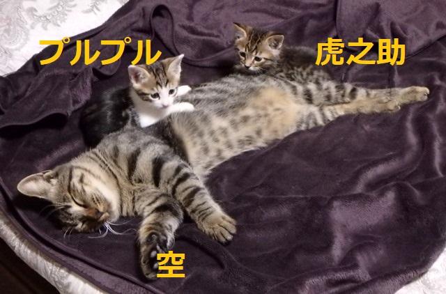 f:id:nekoyanookami:20191029142142j:plain