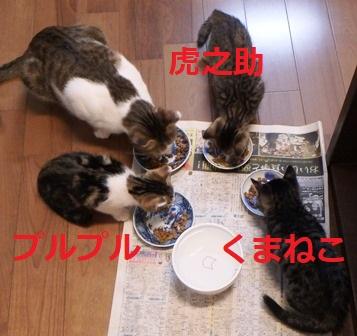 f:id:nekoyanookami:20191029142203j:plain