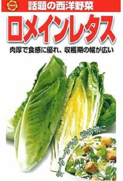 f:id:nekoyanookami:20191104224636j:plain