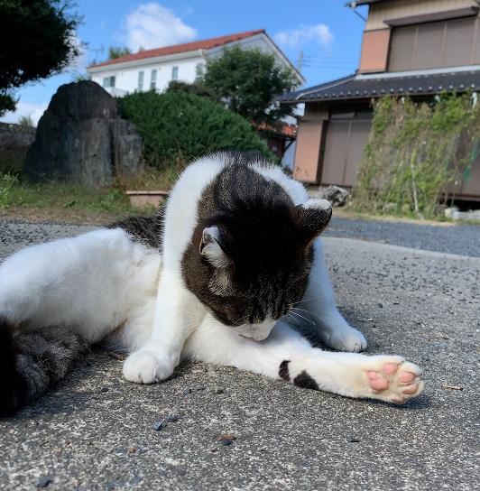 f:id:nekoyanookami:20191104230200j:plain