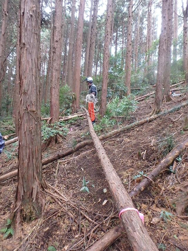 f:id:nekoyanookami:20200111164910j:plain