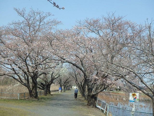 f:id:nekoyanookami:20200329115044j:plain