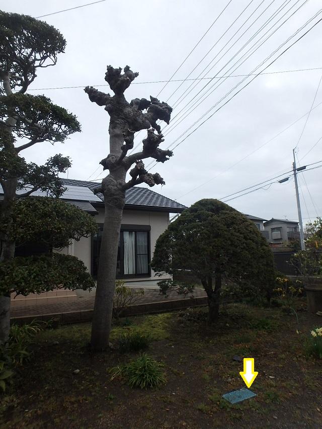 f:id:nekoyanookami:20200401182149j:plain