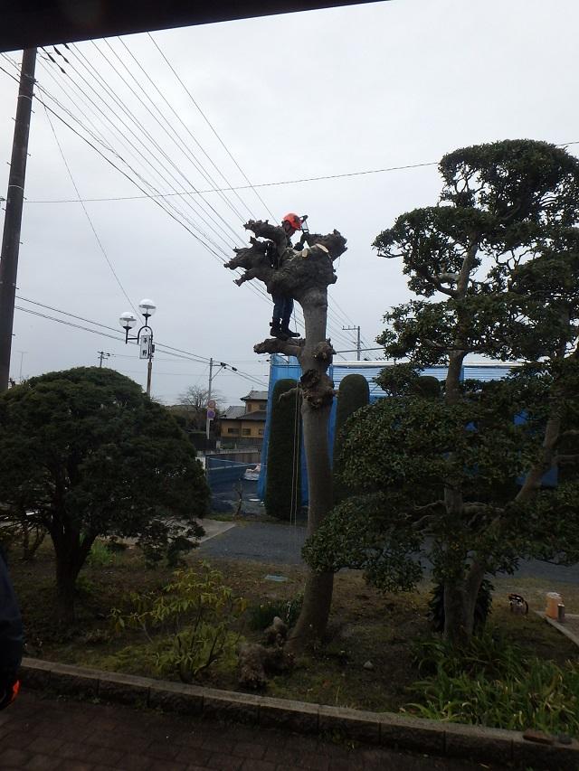 f:id:nekoyanookami:20200401182947j:plain