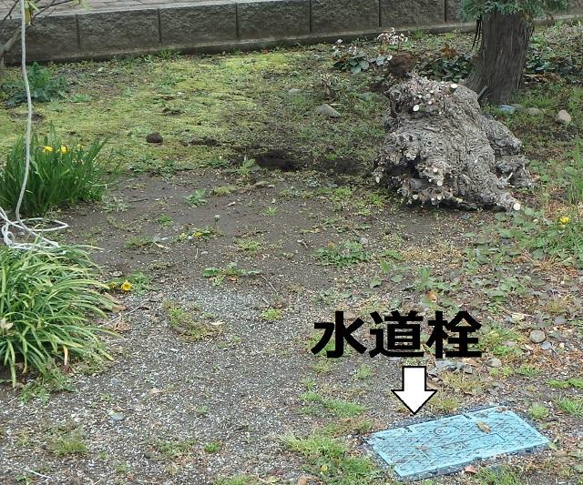 f:id:nekoyanookami:20200401183112j:plain