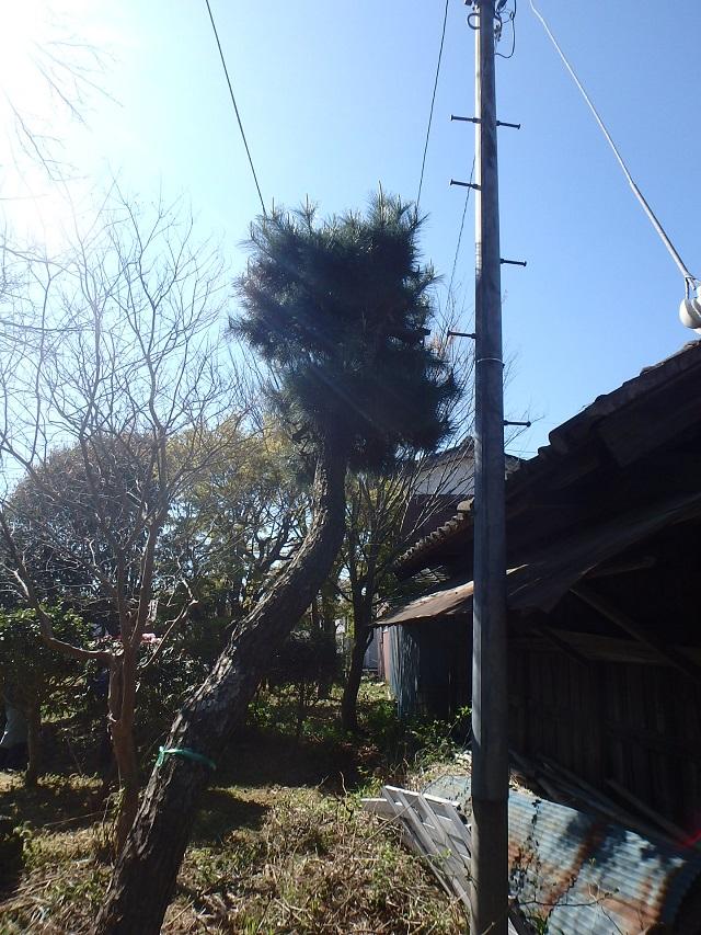 f:id:nekoyanookami:20200412214605j:plain