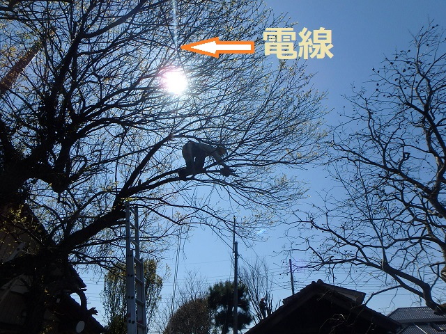 f:id:nekoyanookami:20200412220419j:plain