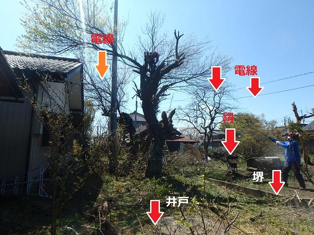 f:id:nekoyanookami:20200412220733j:plain