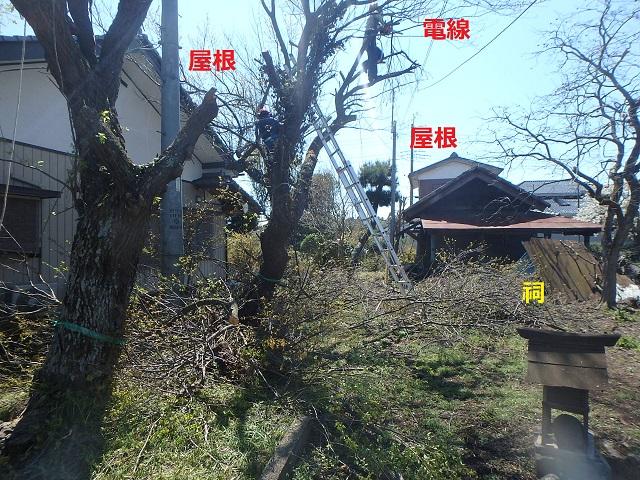 f:id:nekoyanookami:20200412221012j:plain