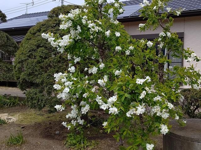 f:id:nekoyanookami:20200418122331j:plain