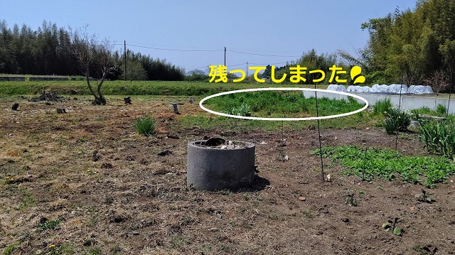 f:id:nekoyanookami:20200502193900j:plain