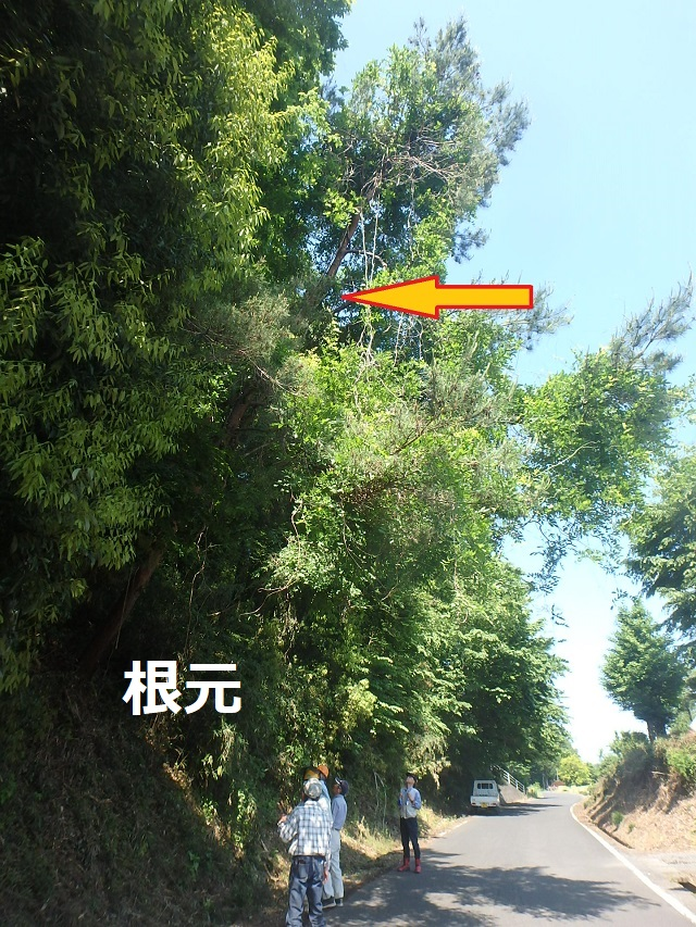 f:id:nekoyanookami:20200531214222j:plain