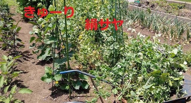 f:id:nekoyanookami:20200609155819j:plain