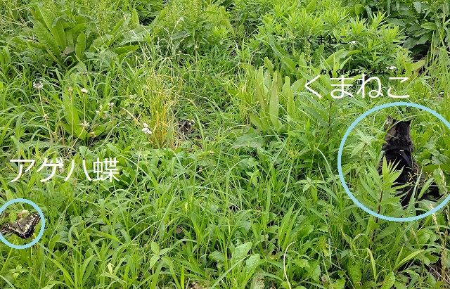 f:id:nekoyanookami:20200718113732j:plain