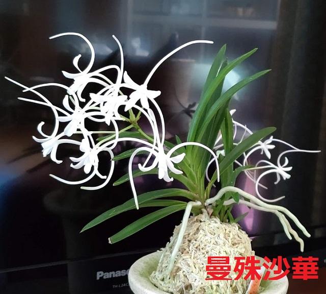 f:id:nekoyanookami:20200725190421j:plain