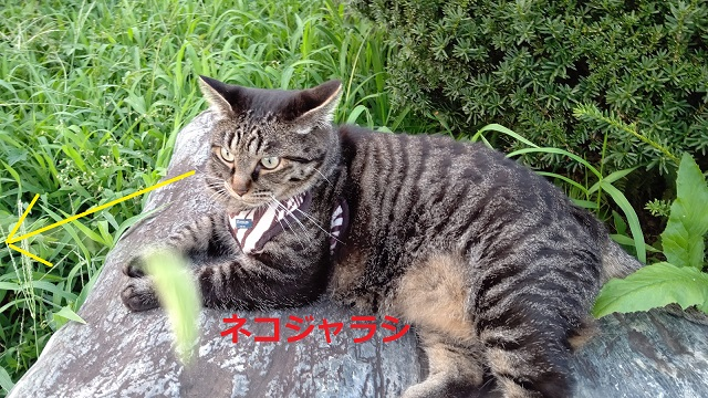 f:id:nekoyanookami:20200820232950j:plain