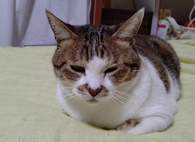 f:id:nekoyanookami:20200903234750j:plain