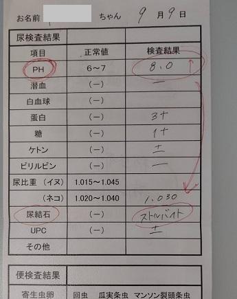 f:id:nekoyanookami:20200909220447j:plain