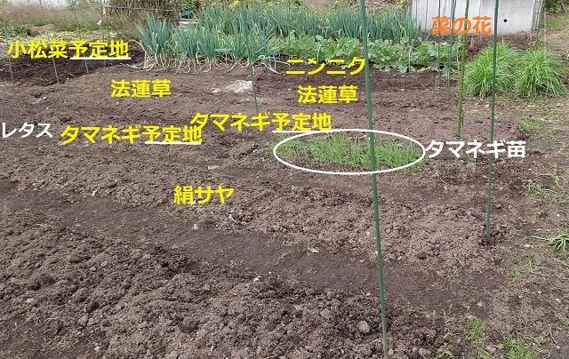 f:id:nekoyanookami:20201106171202j:plain